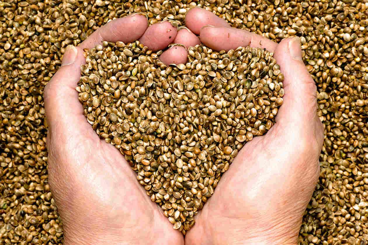 Esta semilla causa pánico a los doctores: adelgaza, cura diabetes y más?increíble pero cierto!!!