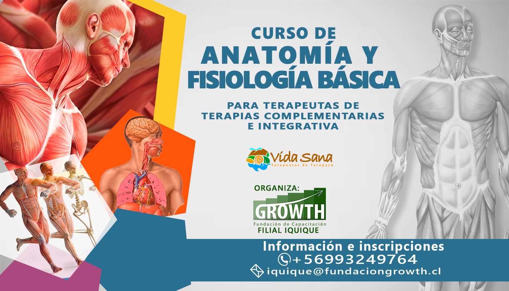 CURSO DE ANATOMÍA Y FISIOLOGÍA BÁSICA PARA TERAPEUTAS - Terapeutas ...
