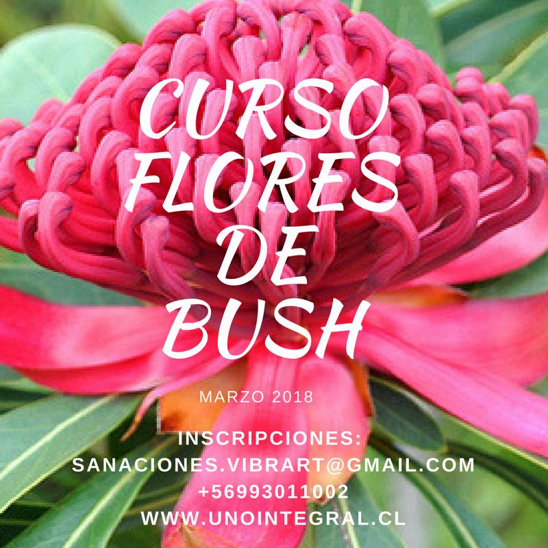 CURSO FLORES DE BUSH